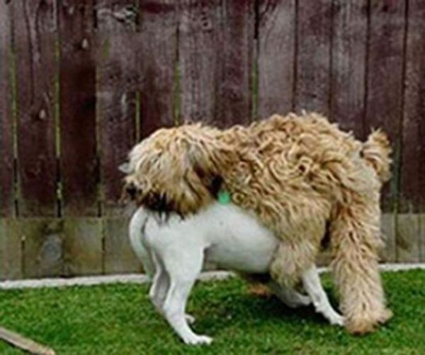 26 Epic Dogs Fails That Are Bound To Make You Fall Off Your Chair (9)