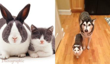 10 Animals Who Could Be Confused For Siblings But Are NOT!