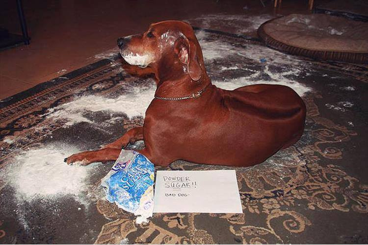 Confessions By These Cute Doggies (10)