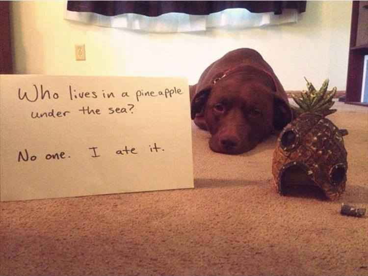 Confessions By These Cute Doggies (17)