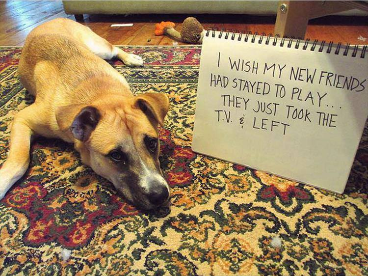 Confessions By These Cute Doggies (3)