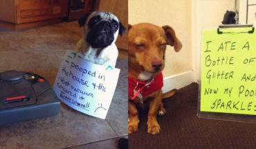 17 Confessions By These Cute Doggies