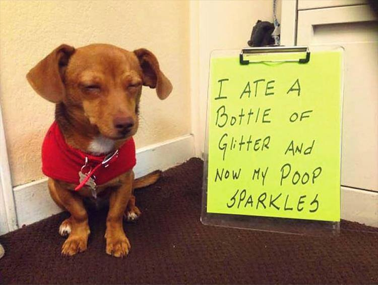 Confessions By These Cute Doggies (6)