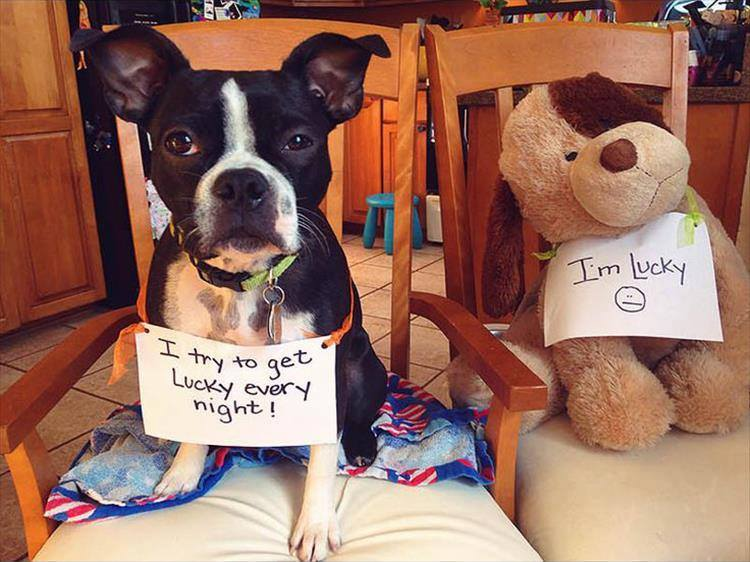 Confessions By These Cute Doggies (8)