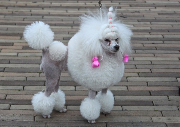 Dogs Who Were Terribly Let Down By Their Groomers (15)