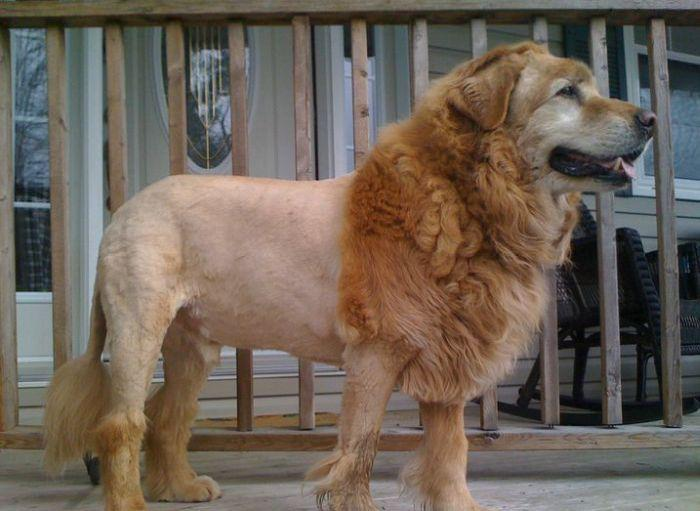 Dogs Who Were Terribly Let Down By Their Groomers (20)