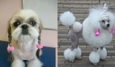 15 Dogs Who Were Terribly Let Down By Their Groomers