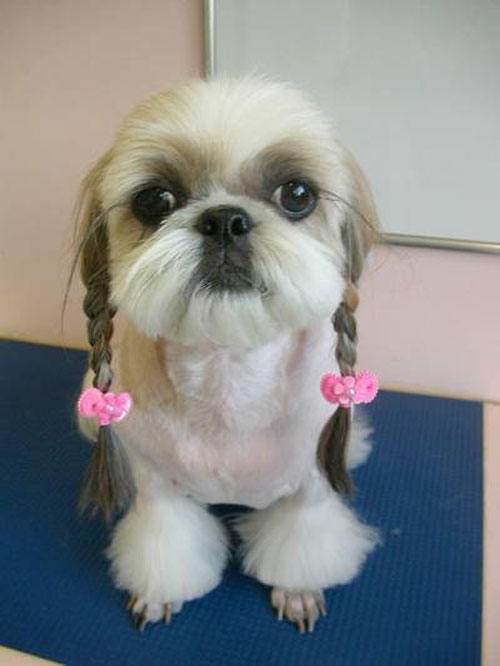 Dogs Who Were Terribly Let Down By Their Groomers (9)