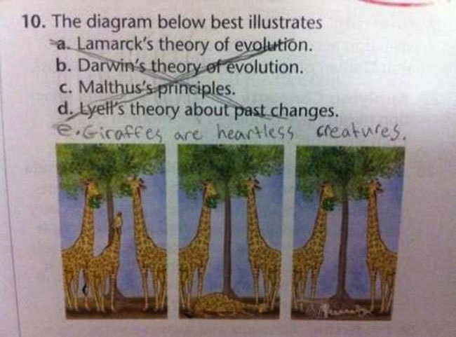 Exam Answers That Wrong But Pure Genuis (24)