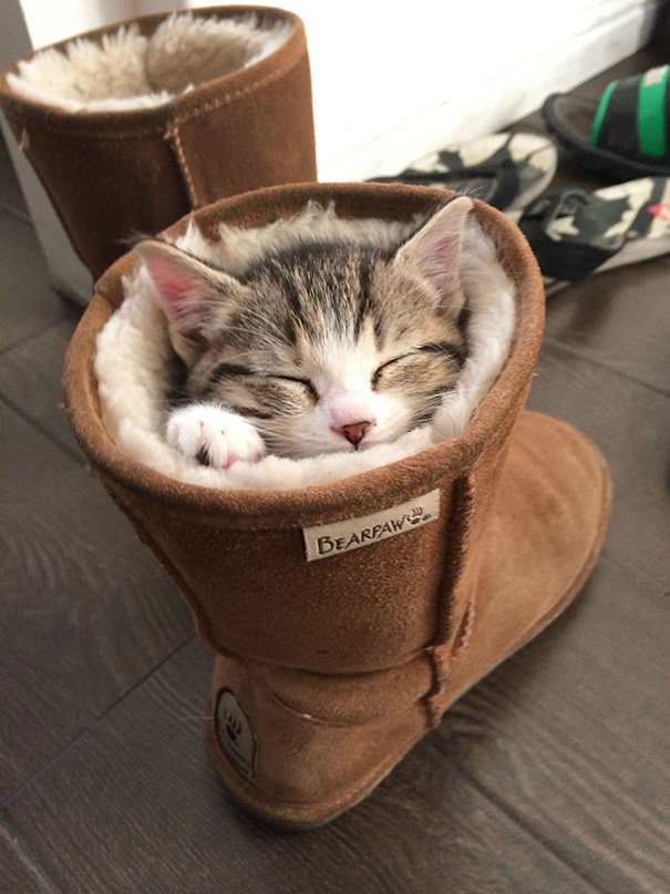 Kittens Who Are Asleep And Hilarious At The Same Time! (6)