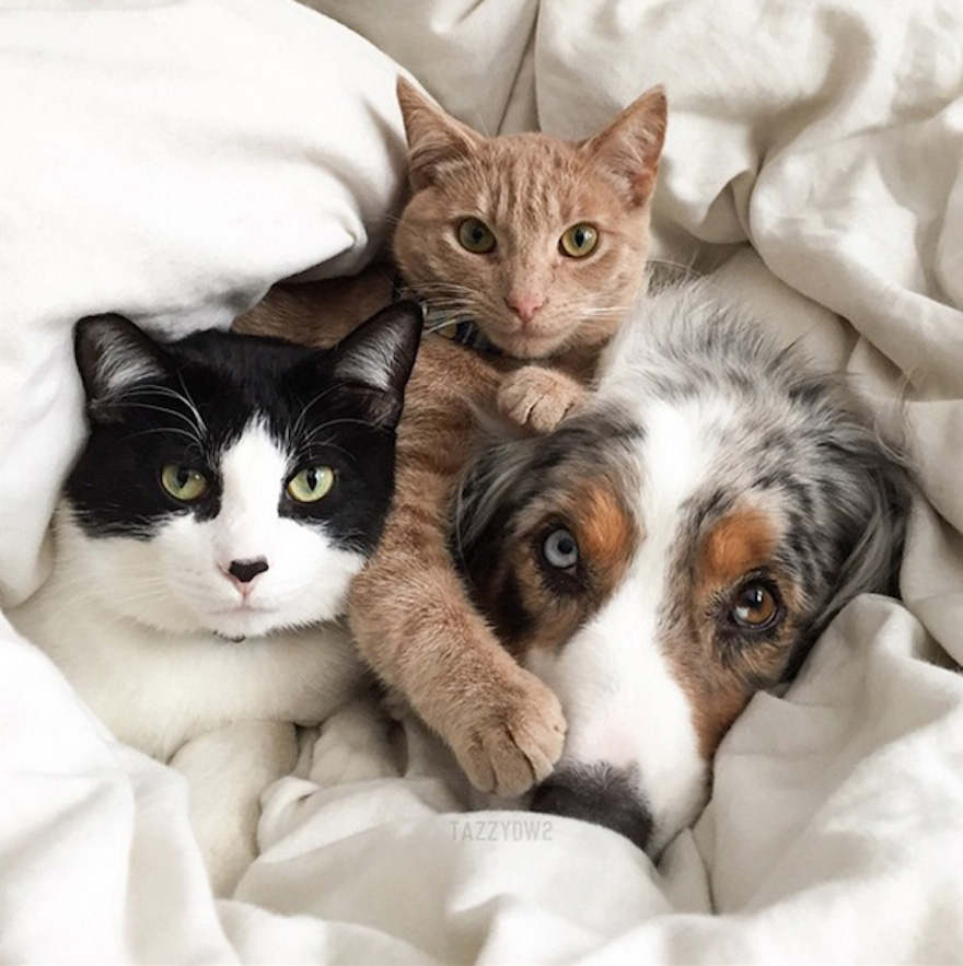 Pictures That Prove Cats And Dogs Are Actually Friends 11