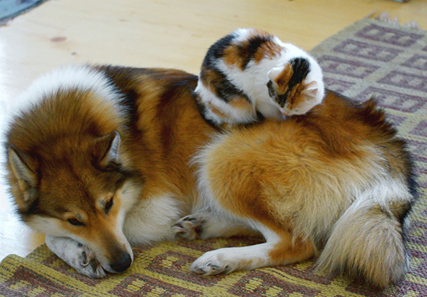 Pictures That Prove Cats And Dogs Are Actually Friends 17