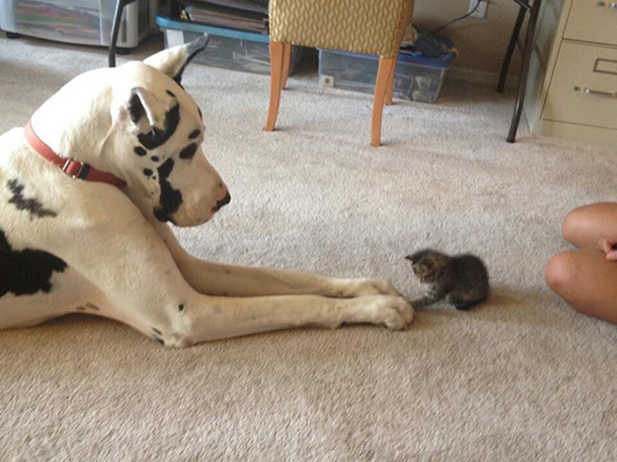 Pictures That Prove Cats And Dogs Are Actually Friends 5