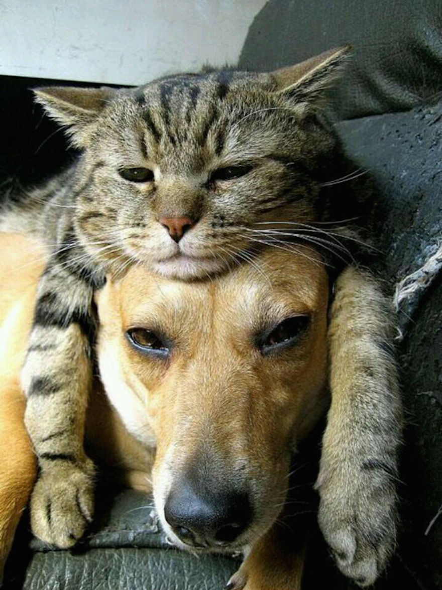 Pictures That Prove Cats And Dogs Are Actually Friends 8