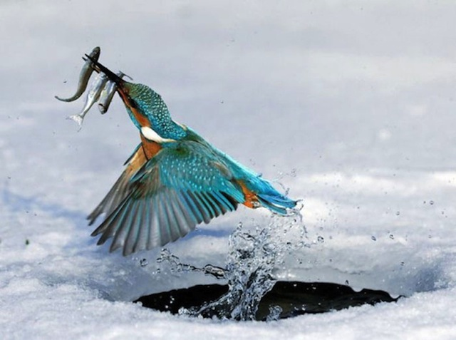 Times Photographers Captured Nature At The Right Time (8)