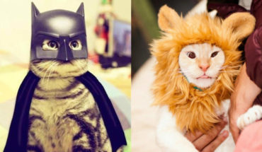 10 Pet Costume Ideas For Halloween