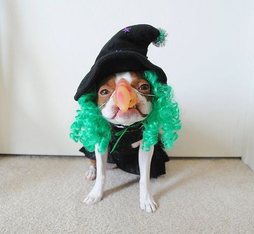 10-pet-costume-ideas-for-halloween-7