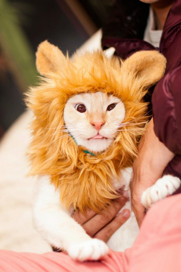 10-pet-costume-ideas-for-halloween-8