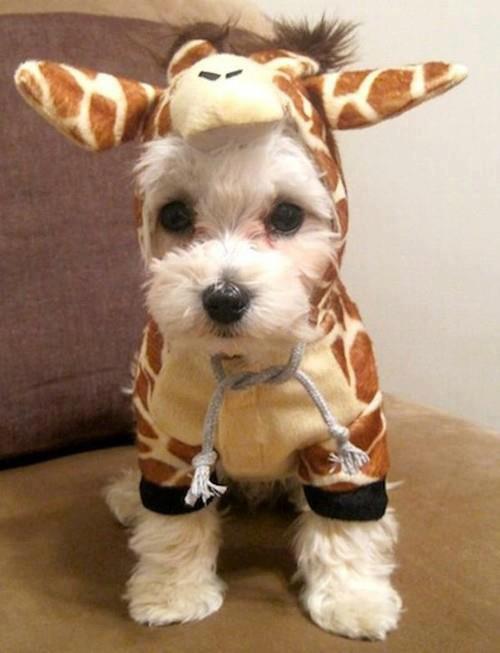 10-pet-costume-ideas-for-halloween-9