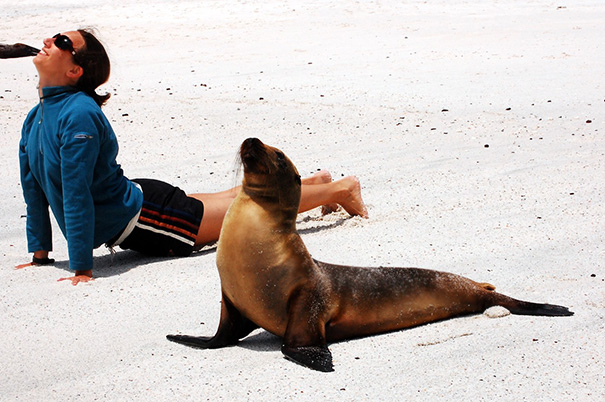 15 Animals Who Are Here To Give You Some Yoga Goals (11)