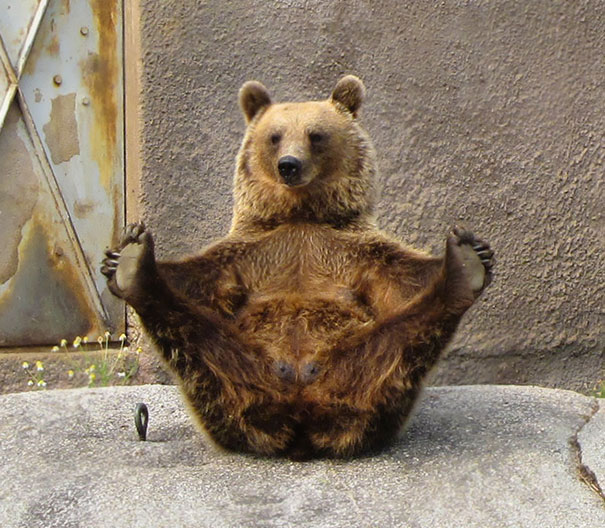 15 Animals Who Are Here To Give You Some Yoga Goals (5)