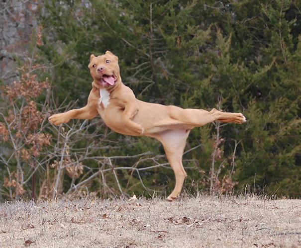 15 Animals Who Are Here To Give You Some Yoga Goals (7)