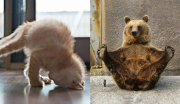 15 Animals Who Are Here To Give You Some Yoga Goals