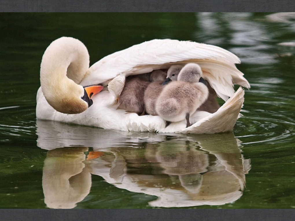 Incredible Photos Of Families From The Animal Kingdom (1)