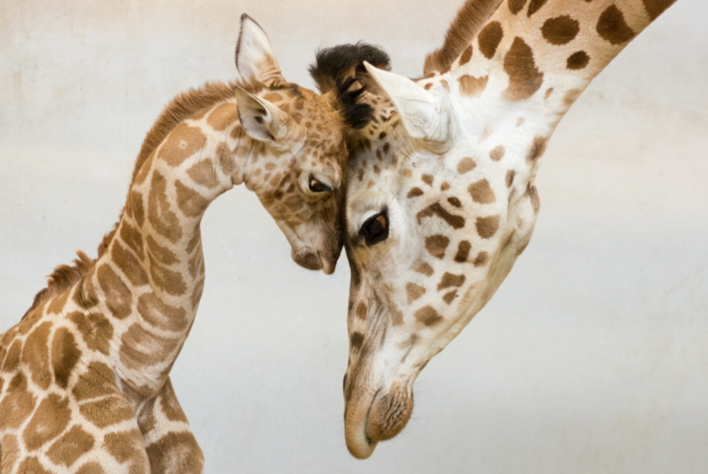 Incredible Photos Of Families From The Animal Kingdom (2)