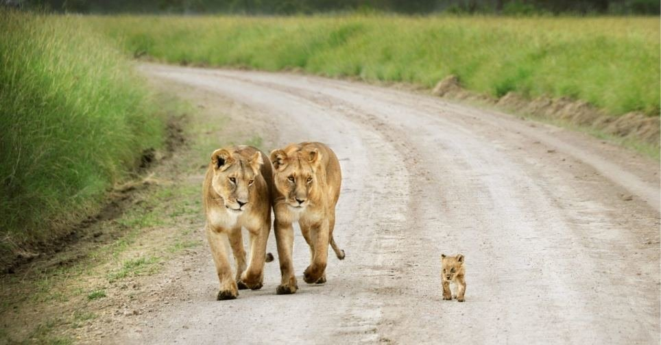 Incredible Photos Of Families From The Animal Kingdom (7)