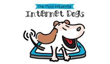 5 Dogs That Are The Biggest Internet Sensations