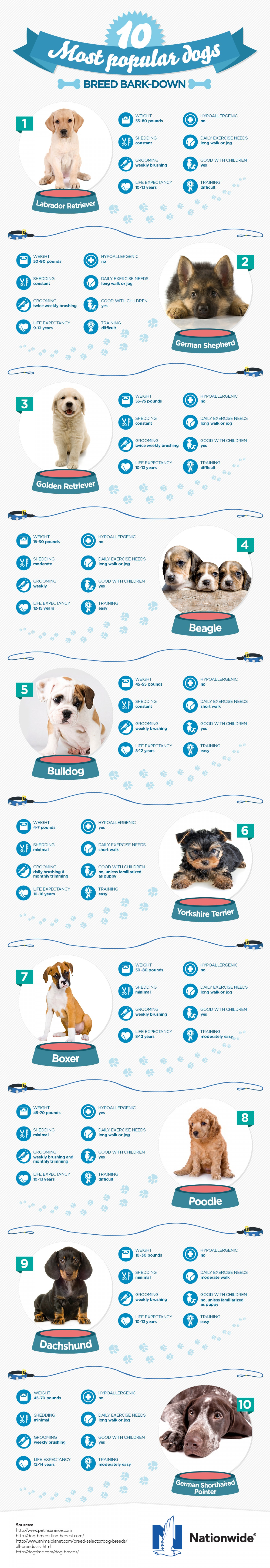 Top 10 Most Popular Dog Breeds