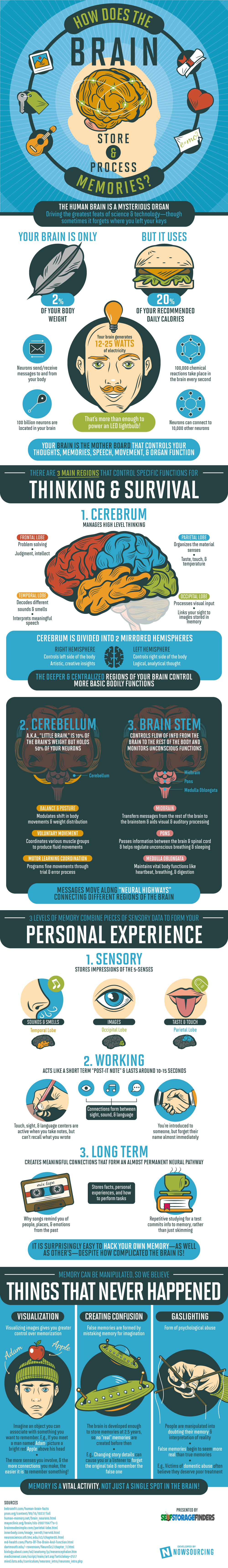 Know Your Brain Better - Infographic