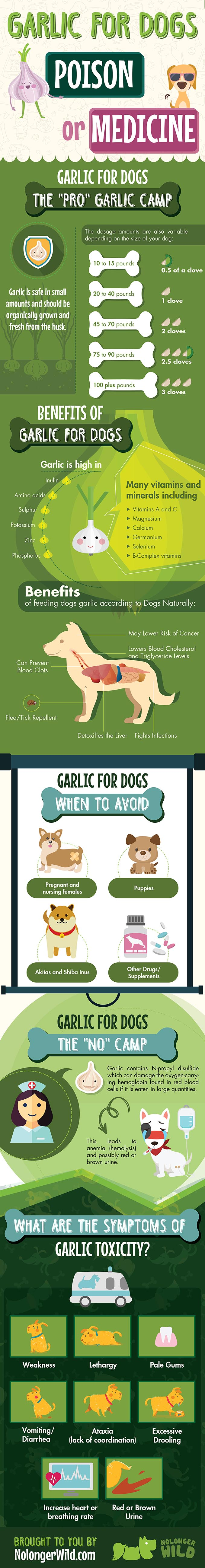 Should Your Dog Be Eating Garlic - Infographic