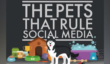 Pets That Are Social Media Sensations - Infographic