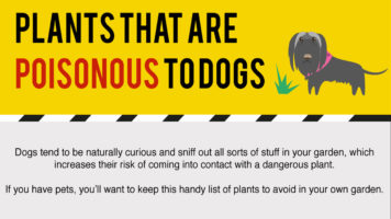 Plants That Can Harm Dogs With Their Poison - Infographic