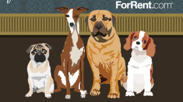 THESE Dog Breeds Are Most Suitable For Apartments - Infographic