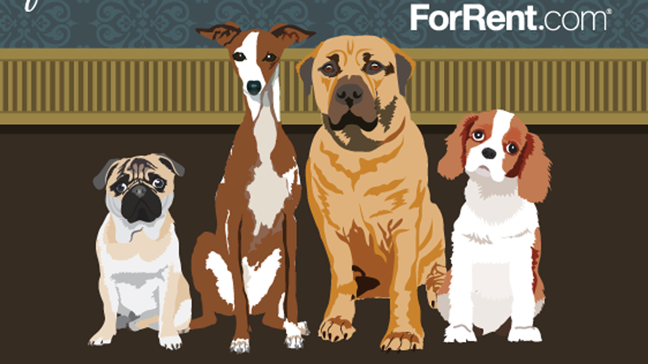 These dog breeds are most suitable for apartments for Most apartment friendly dogs