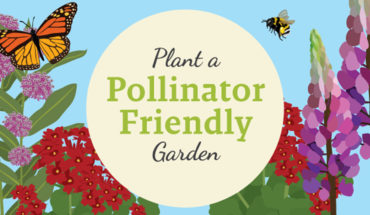 Building A Garden That's Pollinator-Friendly - Infographic