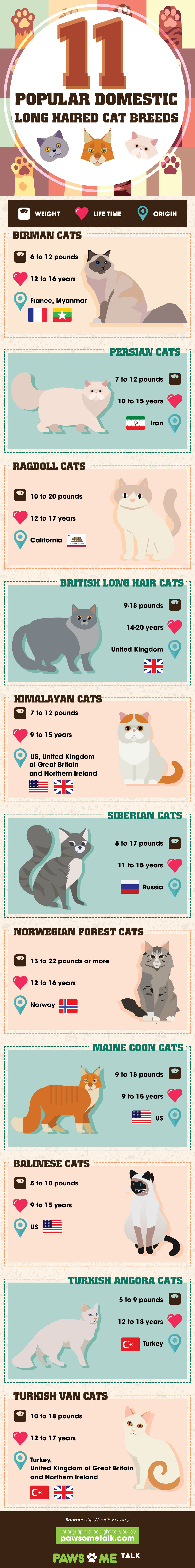 Long Haired Cats That Are Very Pettable - Infographic