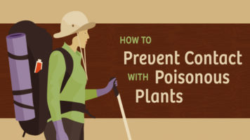 A Guide To Dealing With Poisonous Plants - Infographic
