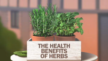 Herbs And Their Various Health Benefits - Infographic