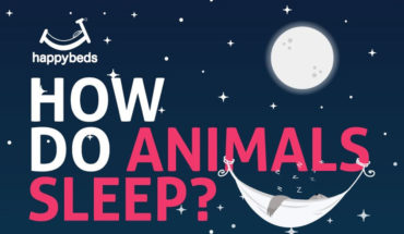 Sleeping Patterns Of Animals - Infographic