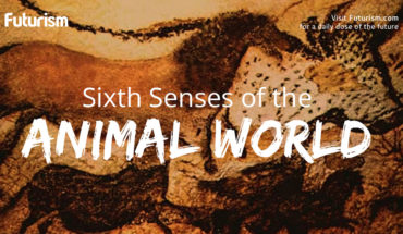 The Sixth Sense In Animals - Infographic