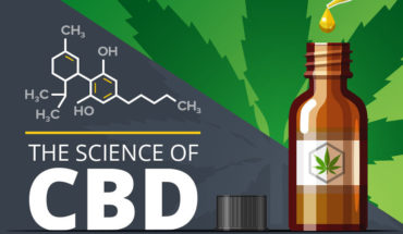 Understanding How CBD Actually Works - Infographic