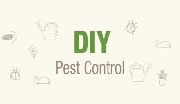 Secrets To A Pest-Free Home - Infographic