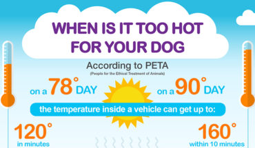 How to Protect Your Dog from a Heat Stroke - Infographic
