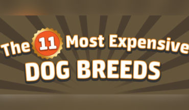 Top 11 Most Expensive Dog Breeds - Infographic