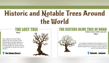43 Trees from History Books - Infographic