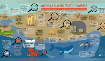 Animals and Their Lovable Young - Infographic